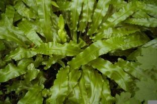 alghe